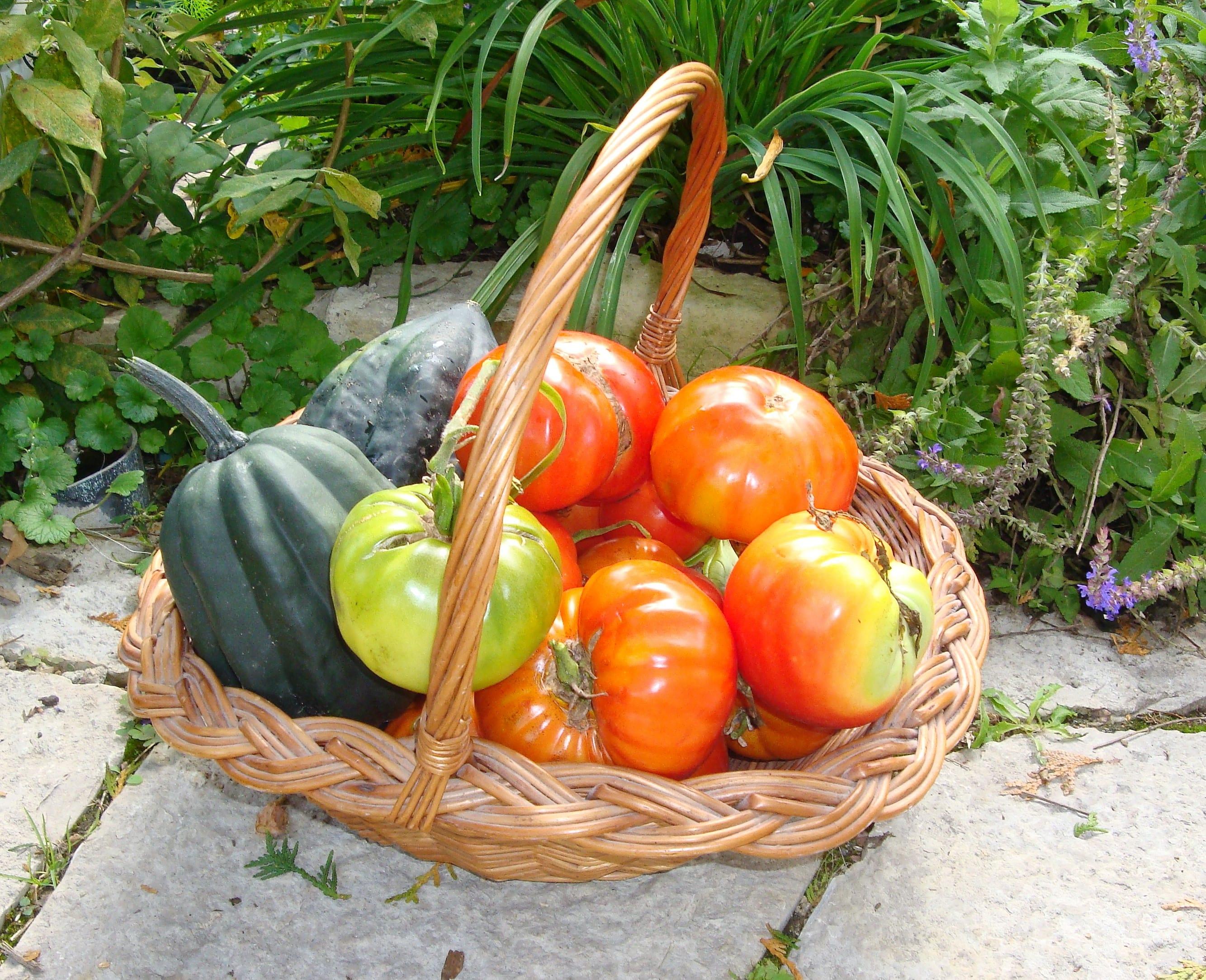 Hot Crops! Summer Veg Gardening