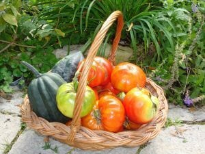 Hot-Crops-Summer-Veg-Gardening